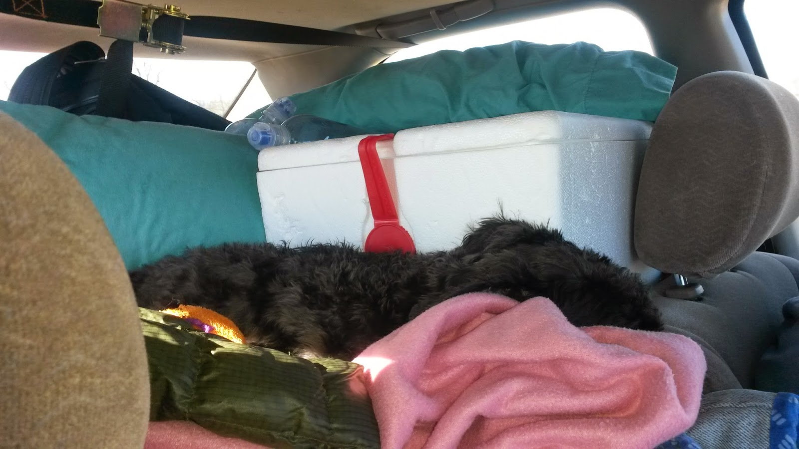 cross country road trip with pets