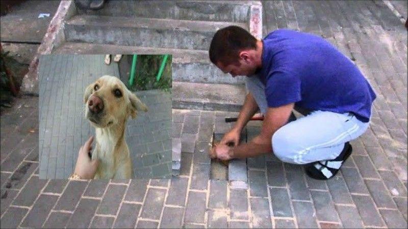 Έγκυος σκυλίτσα εγκλωβίστηκε ζωντανή κάτω από πεζοδρόμιο..(βίντεο)