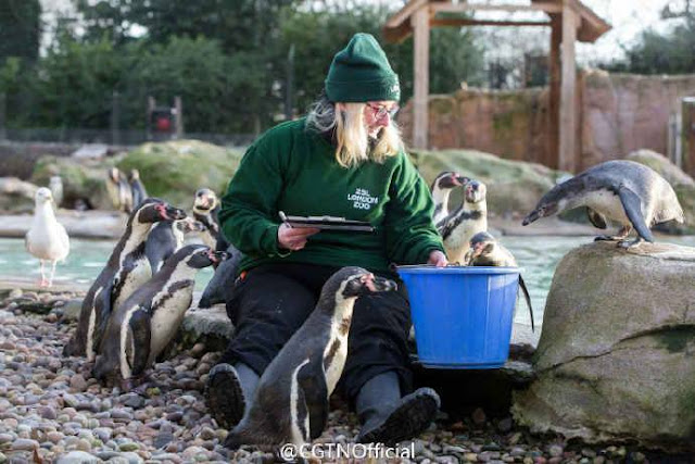 London Zoo's annual animal count kicked off on Tuesday.