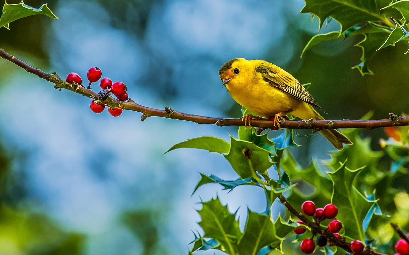 Birds On Tree HD Wallpaper