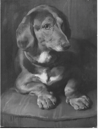 A b&w painting by Sir Edwin Landseer of Waldmann, Queen Victoria's dachshund
