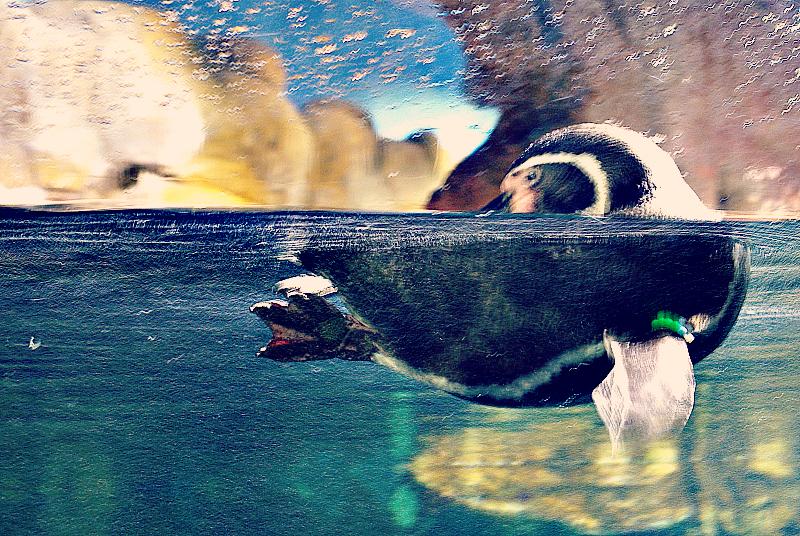 Pingwin - Oceanarium w Barcelonie