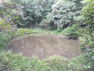 Pond, Ponds, Spring Fed Ponds