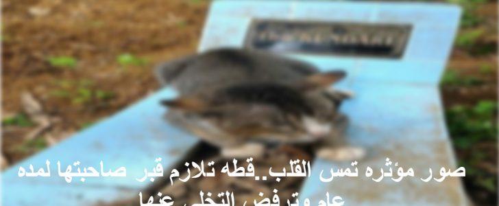 صور مؤثره تمس القلب..قطه تلازم قبر صاحبتها لمده عام وترفض التخلى عنها