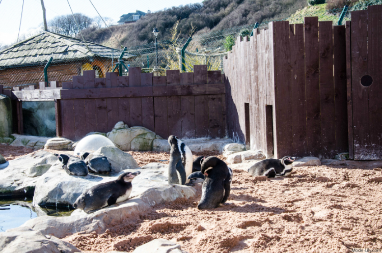 Travel Diary: Places to Visit in Scarborough - Sea Life Sanctuary