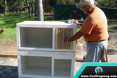 How to Make a Pigeon Cage