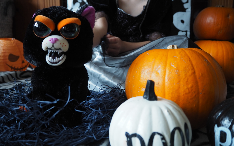 Feisty Pet Cranky Cathy, a 25cm soft toy, the toy is black with big doe eyes, cartoonish orange eyebrows, a white mouth and snarly white fangs sits on a nest of black shredded paper surrounded by assorted pumpkins.