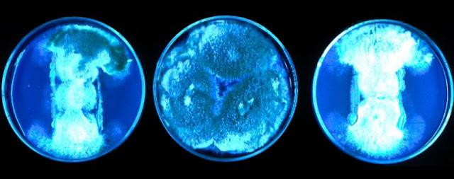 Microorganismos patogenos, virulencia y biologia