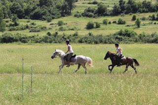 Albania, vuoristo, tarpaanihevonen, laukka, ratsastusmatka, riitta reissaa