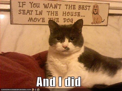 Interesting Pictures Funny: Random Interesting Topics And Photos: Funny/Cute Cat And