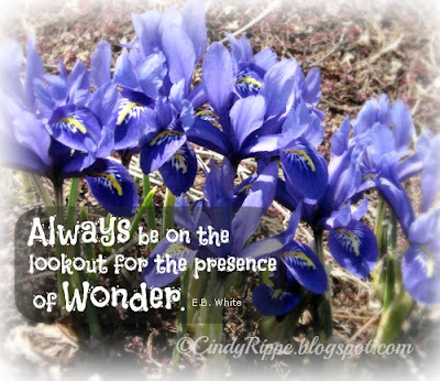 Miniature Irises, Always look for Wonder, E.B. White quote, Blue flowers, Lake Katherine, Florals-Family-Faith, Cindy Rippe