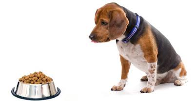The Basics of Dog Feeding