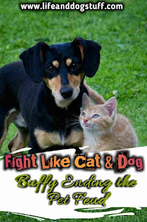Fight Like Cat and Dog - Ending the Pet Feud