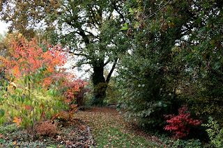 automne au jardin et ses belles couleurs