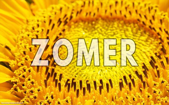 Bloemen close up foto van een zonnebloem met de tekst zomer