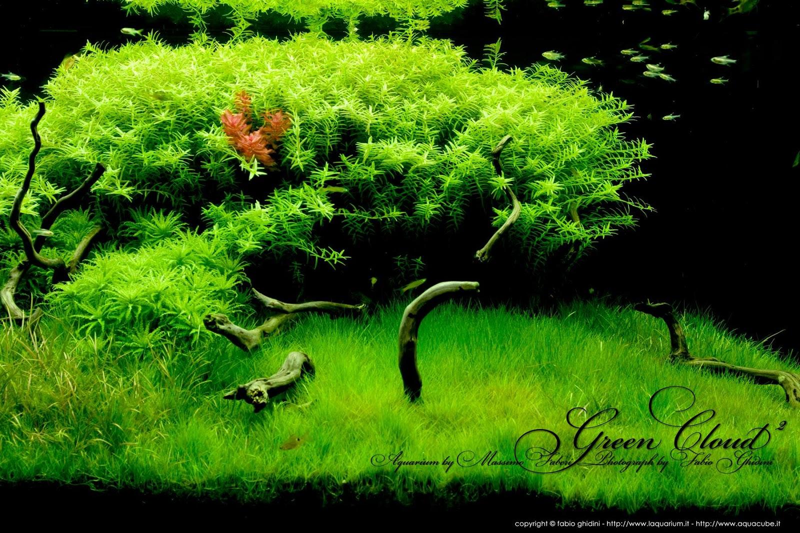 một hồ thủy sinh với cây vẩy ốc xanh tuyệt đẹp