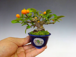 bonsai mini8