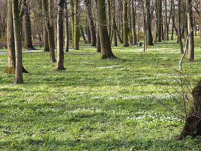 Ponidzie, Busko Zdrój, park zdrojowy w Busku, lecznicze nalewki, lecznicze wody w Busku, grzyby w kwietniu, kwiaty w kwietniu