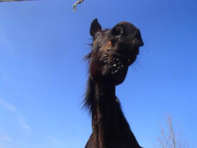 Konie, jazda konna, jazda konna w terenie, jazda konna zimą