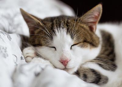 Whatsapp Gallery Whatsapp Status Whatsapp Dp And More Cute Cat Whatsapp Dp For Girls Boys That Makes You Awww