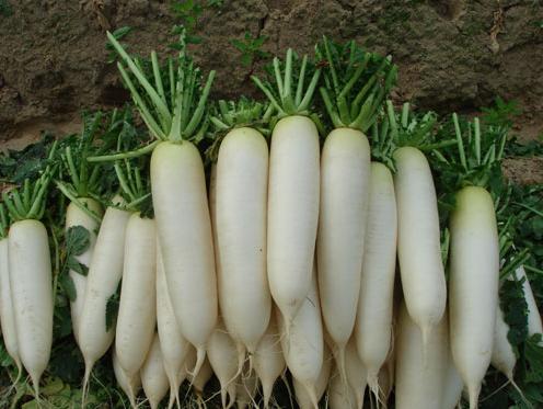 Chăm sóc làn da tàn nhang bằng củ cải trắng