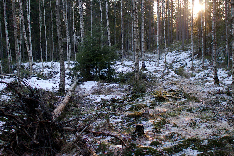 Valo siivilöityy puiden välistä