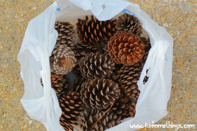 Diy painted pine cones fun home things for Things to make with fir cones