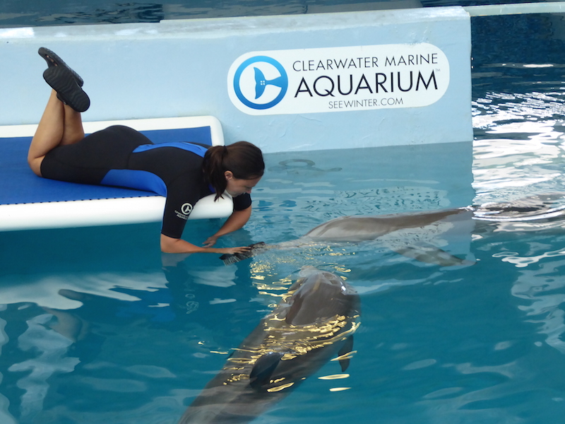 A Day Out At Clearwater Marine Aquarium The Diary Of A Jewellery Lover