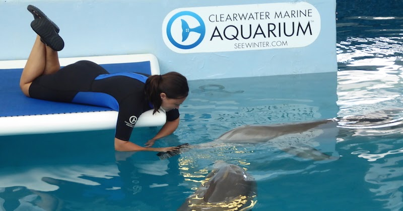 A Day Out At Clearwater Marine Aquarium The Diary Of A