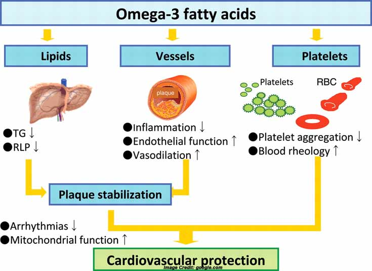 The Health Benefits of Omega 3, 6, 9 ~ Health Tips