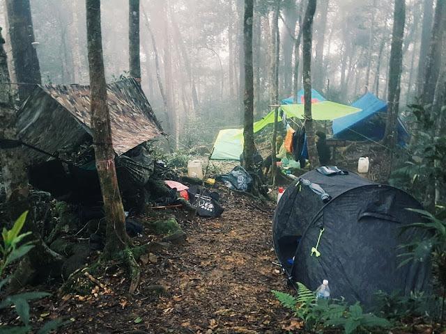 Kem Musang Gunung Tambuyukon Sabah