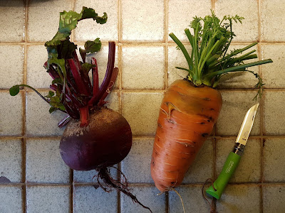 giant beetroots and carrots!