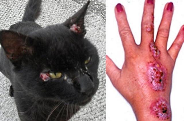 Resultado de imagem para gatos doenças