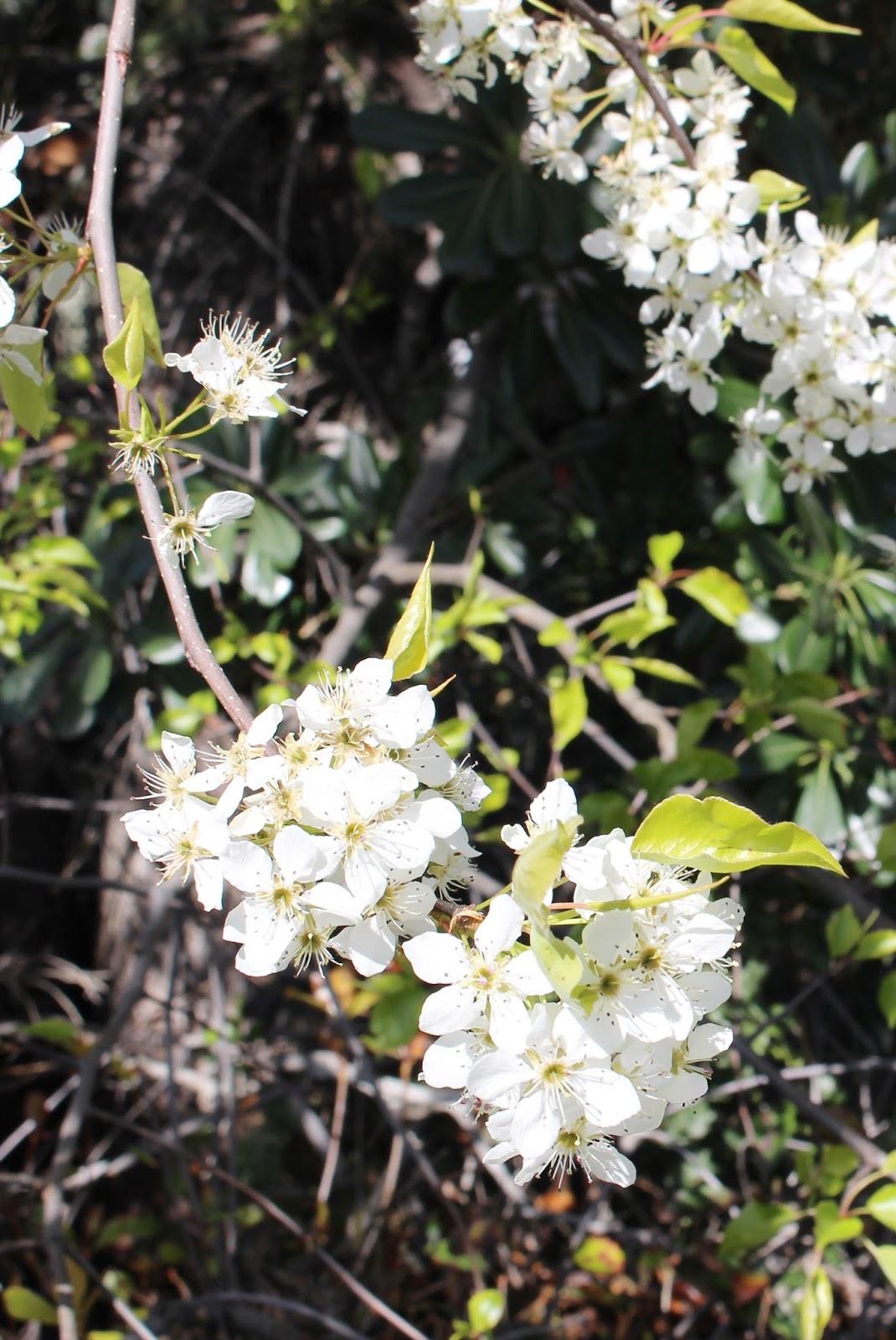 Floral Days: My Spring Bucket List
