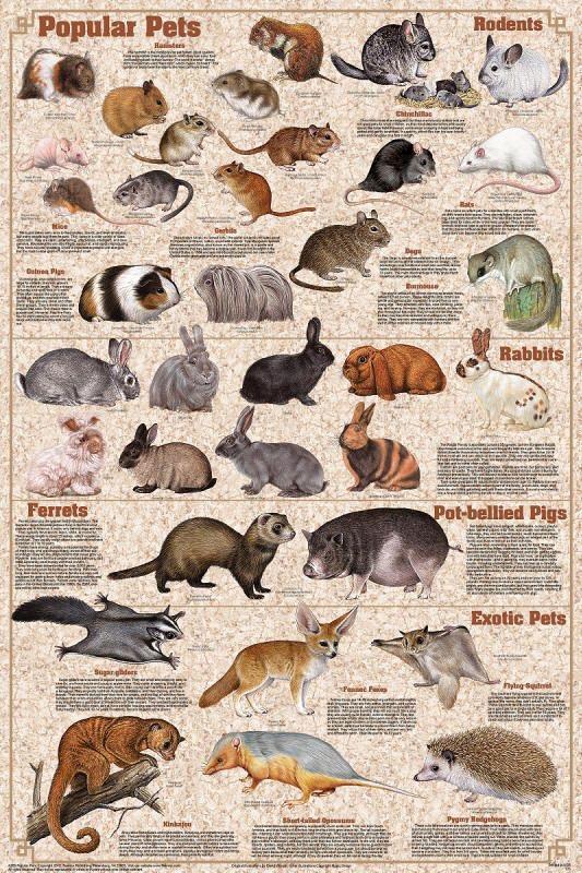 Animais Domésticos