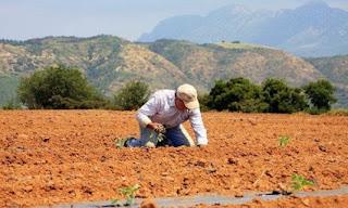 Διευκρινήσεις για τη δήλωση αγροτικού εισοδήματος