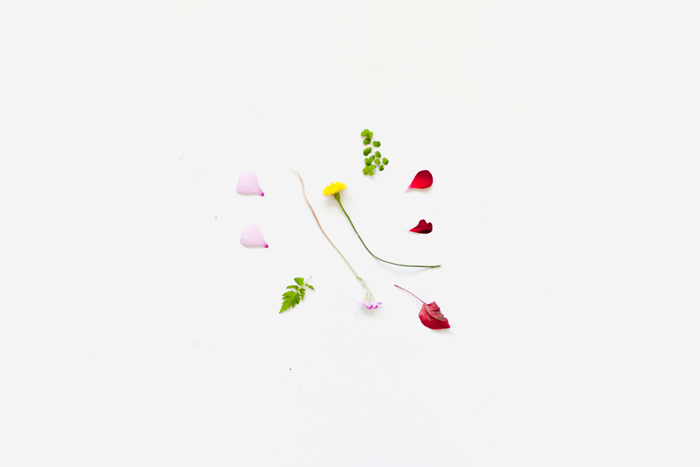 flower and petal knolling