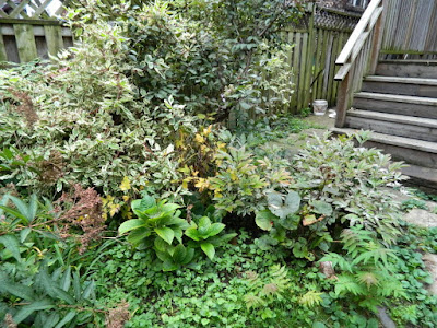 Toronto Backyard Fall Cleanup Before in Riverdale by Paul Jung Gardening Services--a Toronto Organic Gardening Company