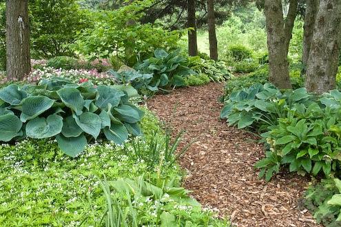 woodland shade gardens kaye