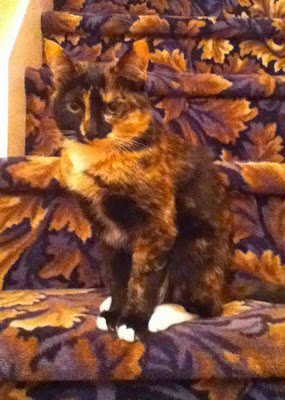 Gato camuflado en escalera