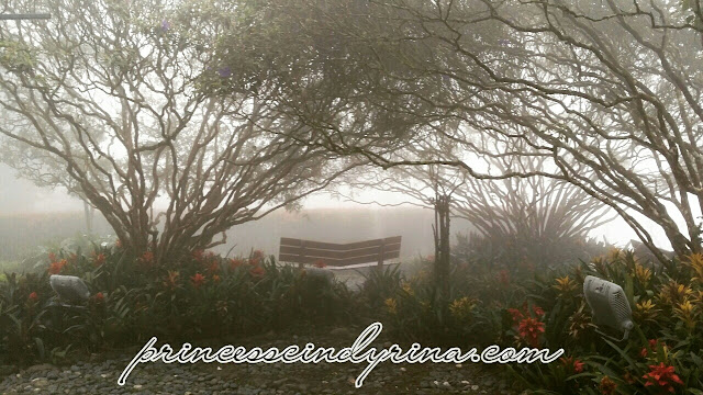 bench between trees shrouded in mist
