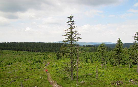 Brousek (1115 m n.p.m.) - widok ze szczytu w kierunku masywu Śnieżnika.