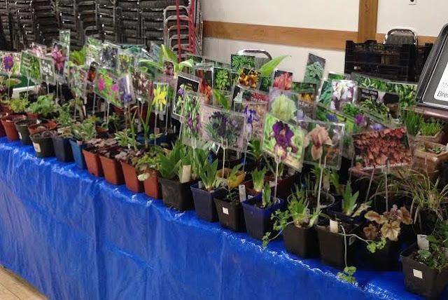 Daylilies, Perennials