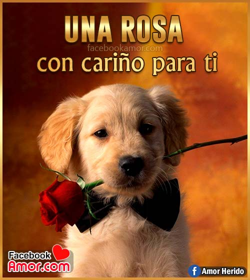 rosa de amor para enviar