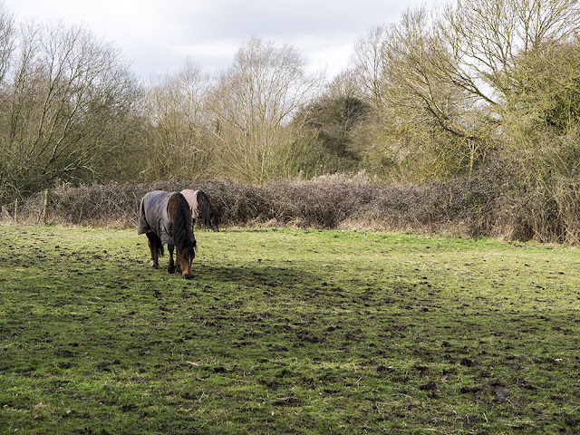 Horses Beside the Canal