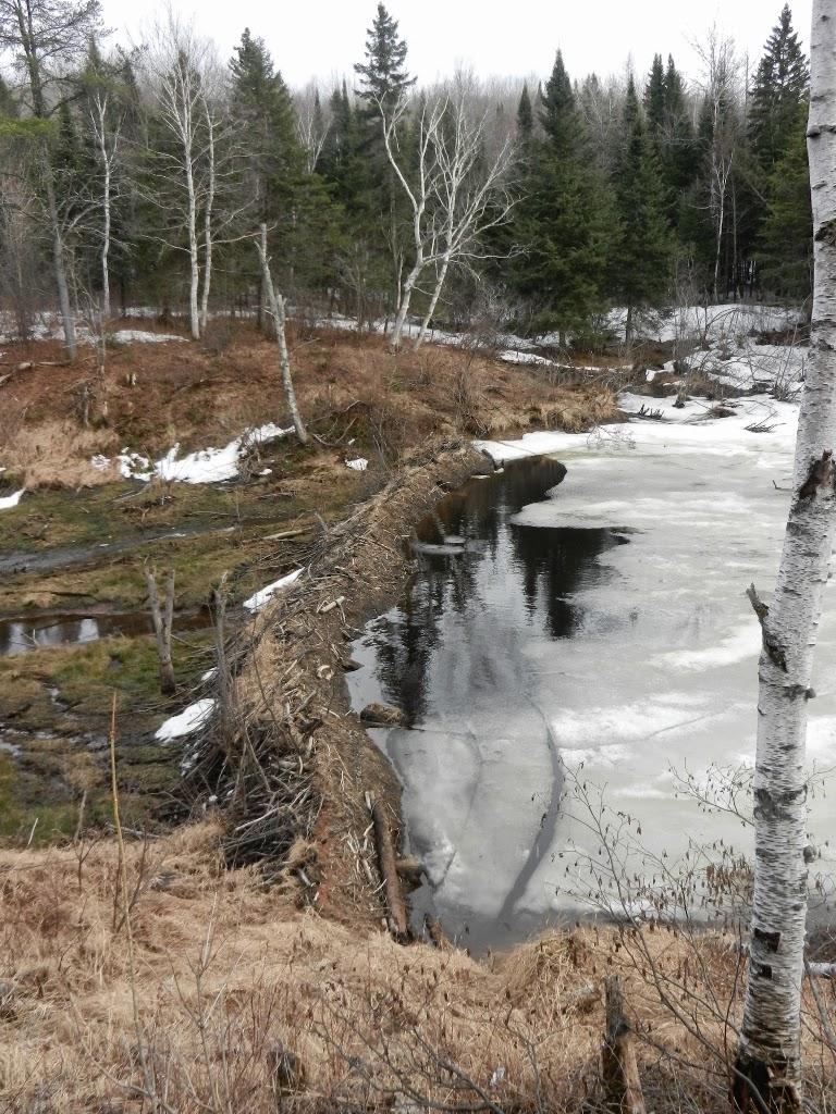 Québec barrage castor