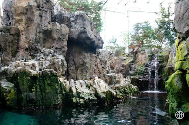 lizbona oceanarium1