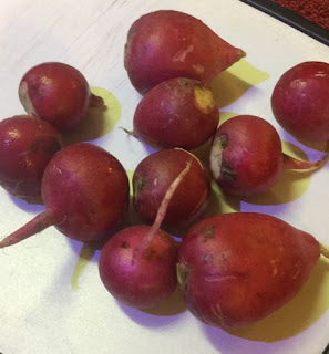 Dehydrating radishes, how to dehydrate a radish, how to use dried radishes, uses for dehydrated radishes