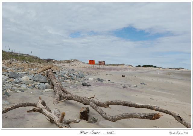 Plum Island: ... until...