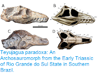 http://sciencythoughts.blogspot.com/2016/03/teyujagua-paradoxa-archosauromorph-from.html